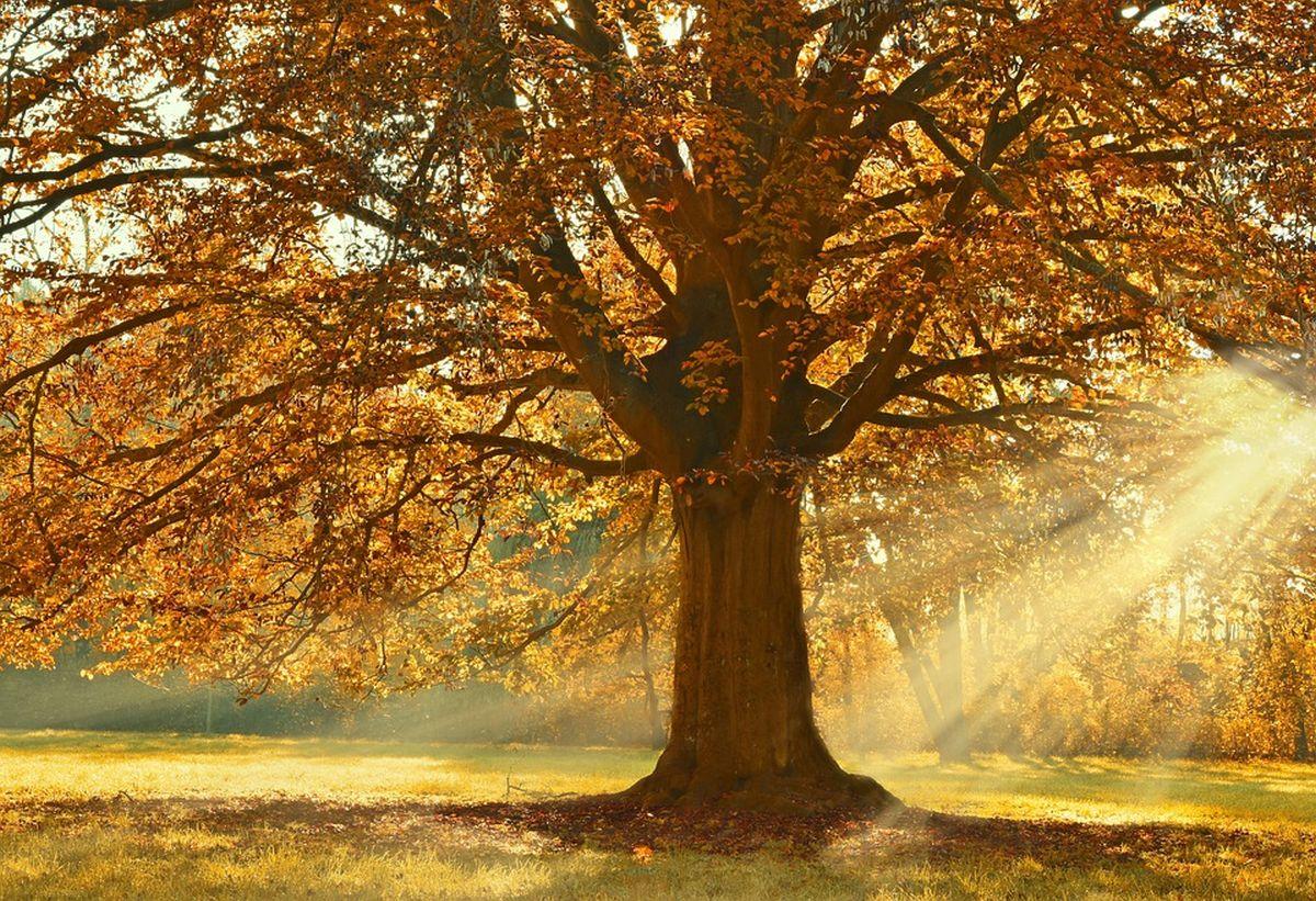 puu-loodus-mets