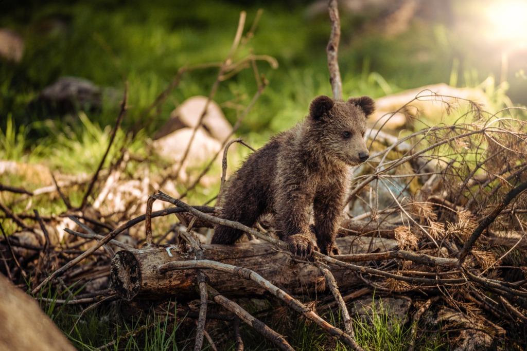 RAAMATUSOOVITUS I Kuidas sa käituksid, kui satuks metsas karuga vastamisi?
