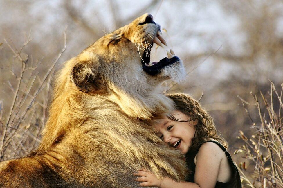 lõvi pixabay